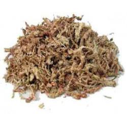 Sphaigne du Chili sac de 150 G - 7,5 L